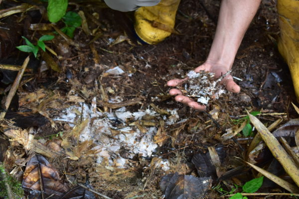 Microorganismos Finca Mashpi Shungo - Red de Guardianes de Semillas