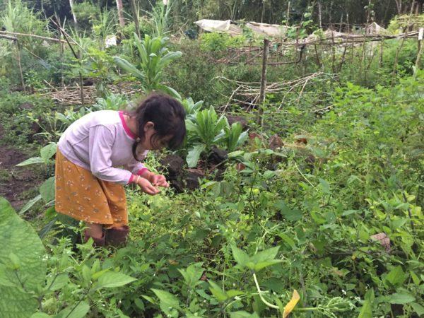 huerta luna garantia agroecologica red de guardianes de semillas ecuador
