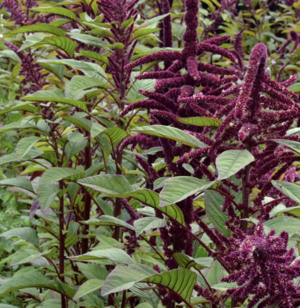 finca muya shuyay garantia agroecologica red de guardianes de semillas ecuador