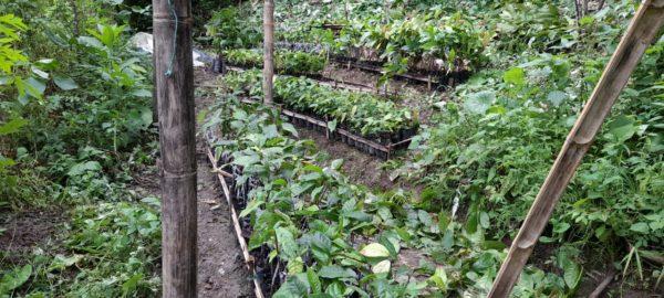 chaguisa garantia agroecologica red de guardianes de semillas ecuador